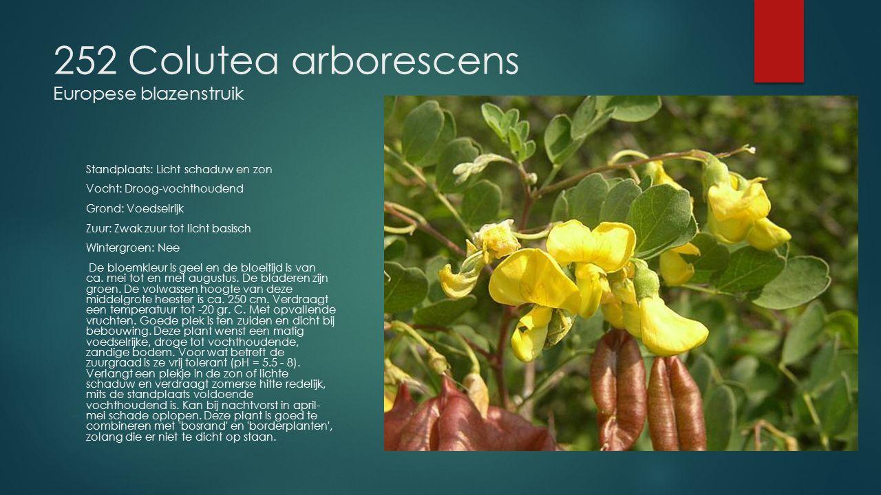 252 Colutea arborescens Europese blazenstruik Standplaats: Licht schaduw en zon Vocht: Droog-vochthoudend Grond: Voedselrijk Zuur: Zwak zuur tot licht