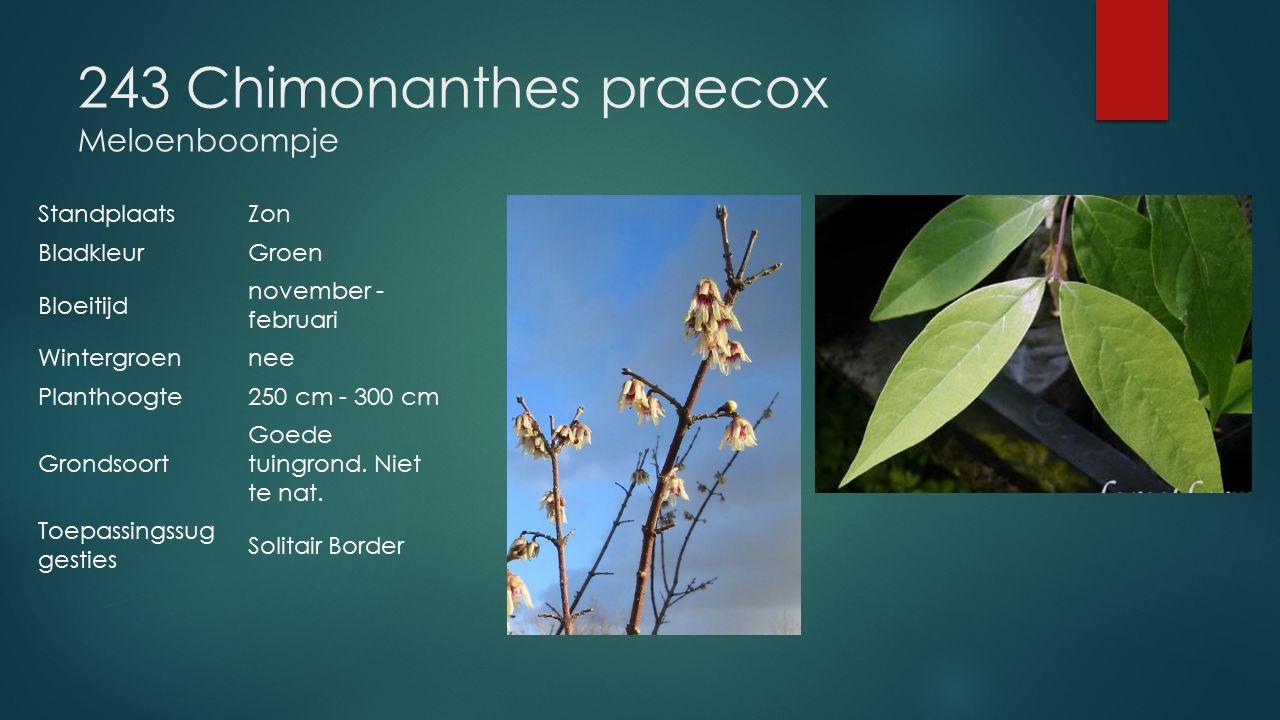 243 Chimonanthes praecox Meloenboompje StandplaatsZon BladkleurGroen Bloeitijd november - februari Wintergroennee Planthoogte250 cm - 300 cm Grondsoor