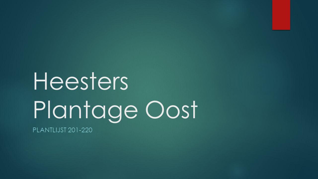 Heesters Plantage Oost PLANTLIJST 201-220