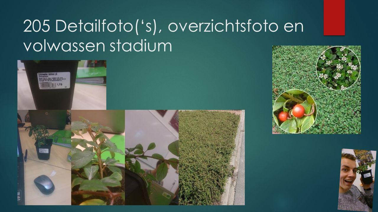 205 Detailfoto('s), overzichtsfoto en volwassen stadium