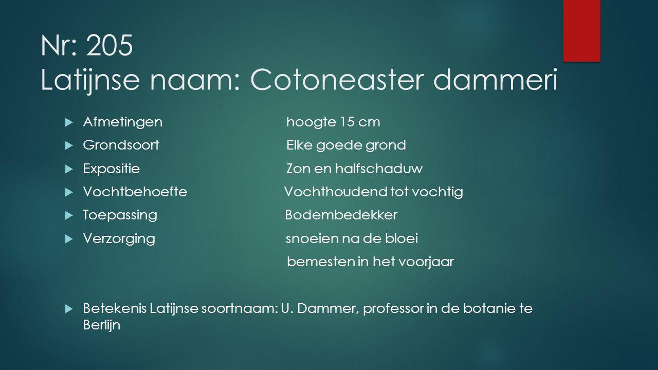 Nr: 205 Latijnse naam: Cotoneaster dammeri  Afmetingenhoogte 15 cm  GrondsoortElke goede grond  Expositie Zon en halfschaduw  Vochtbehoefte Vochth