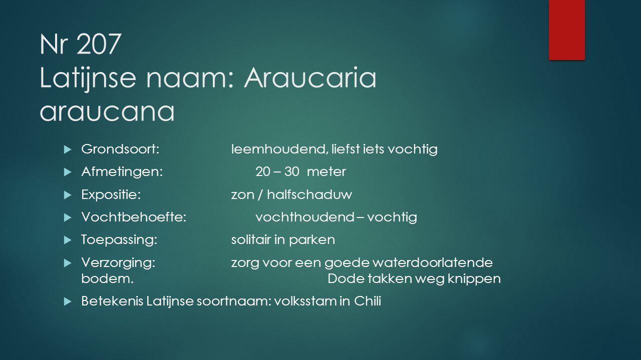 Nr 207 Latijnse naam: Araucaria araucana  Grondsoort:leemhoudend, liefst iets vochtig  Afmetingen: 20 – 30 meter  Expositie: zon / halfschaduw  Vo