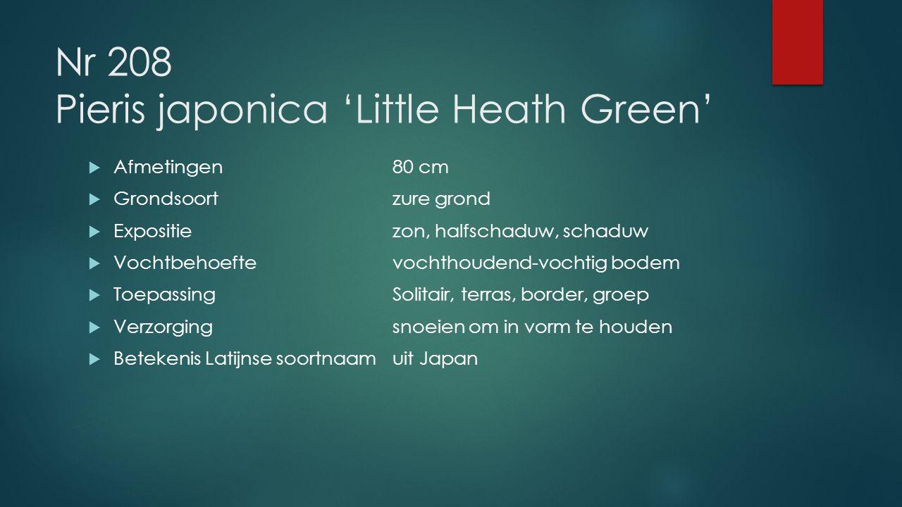 Nr 208 Pieris japonica 'Little Heath Green'  Afmetingen80 cm  Grondsoortzure grond  Expositiezon, halfschaduw, schaduw  Vochtbehoeftevochthoudend-