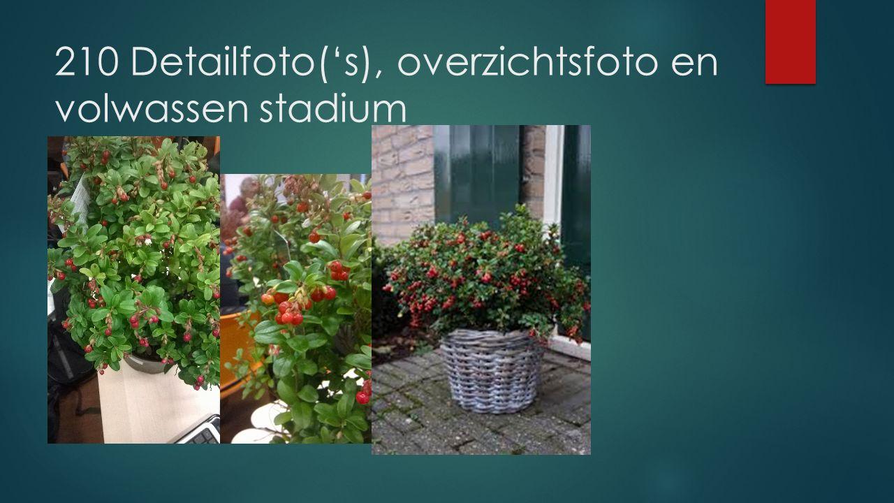 210 Detailfoto('s), overzichtsfoto en volwassen stadium