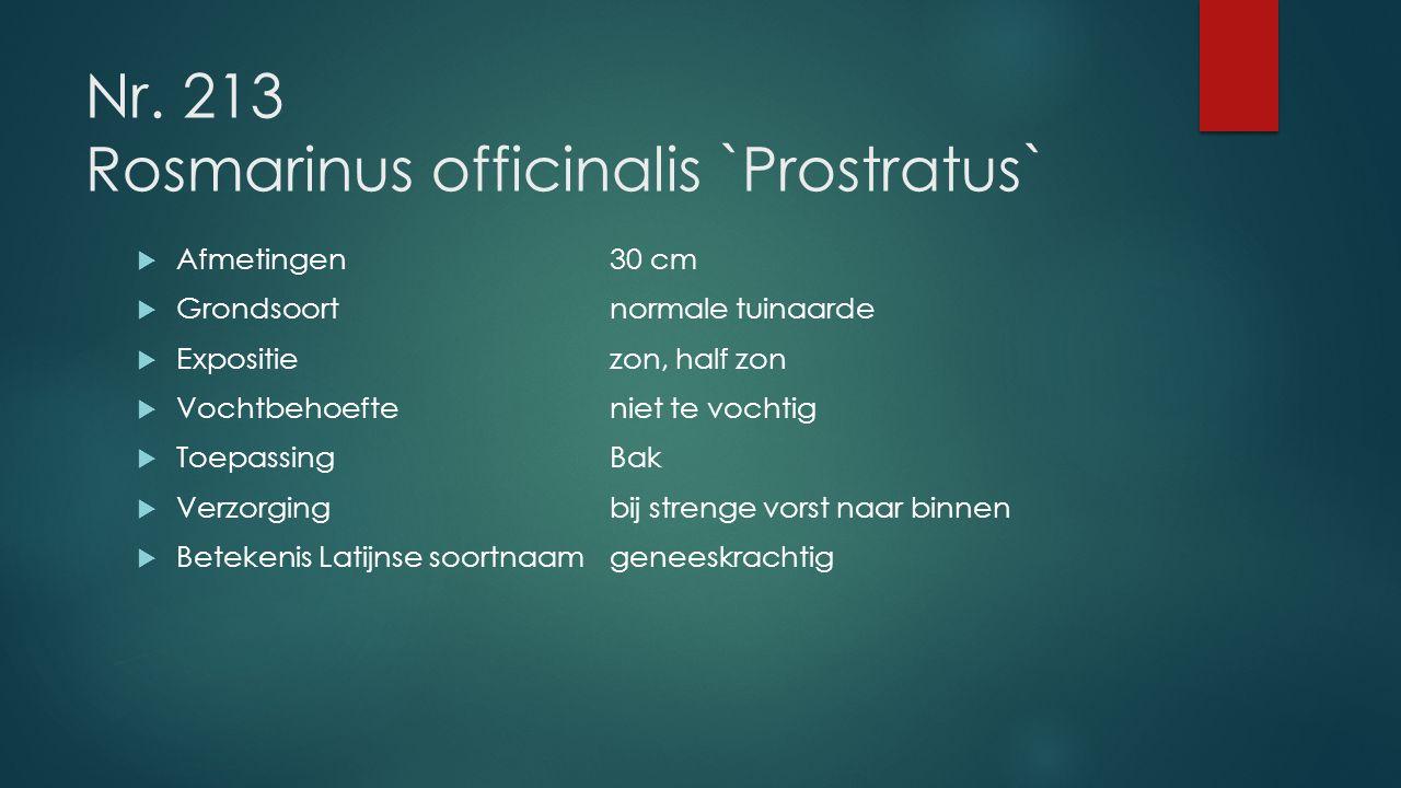 Nr. 213 Rosmarinus officinalis `Prostratus`  Afmetingen30 cm  Grondsoortnormale tuinaarde  Expositiezon, half zon  Vochtbehoefteniet te vochtig 