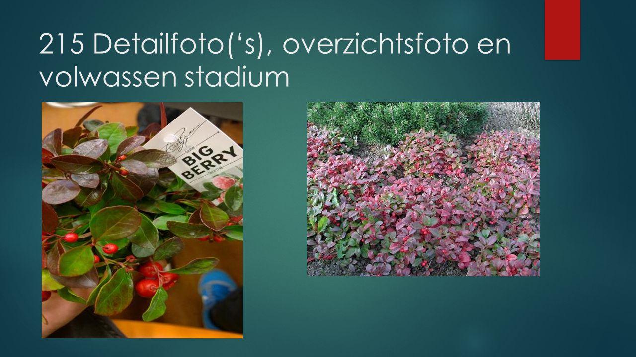215 Detailfoto('s), overzichtsfoto en volwassen stadium