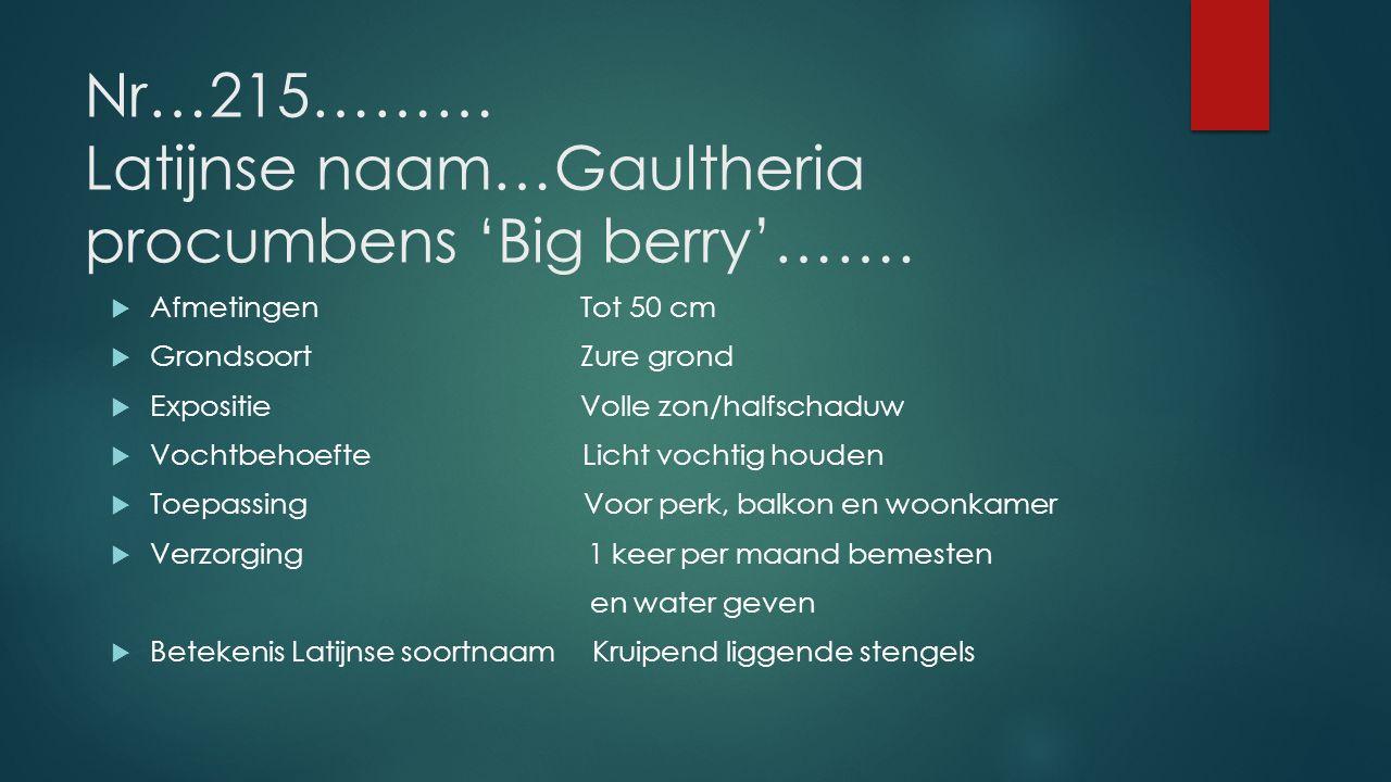 Nr…215……… Latijnse naam…Gaultheria procumbens 'Big berry'…….  AfmetingenTot 50 cm  GrondsoortZure grond  Expositie Volle zon/halfschaduw  Vochtbeh
