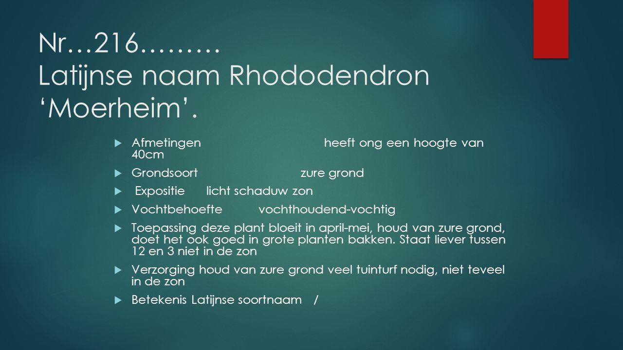 Nr…216……… Latijnse naam Rhododendron 'Moerheim'.  Afmetingenheeft ong een hoogte van 40cm  Grondsoortzure grond  Expositie licht schaduw zon  Voch
