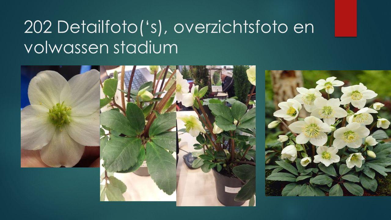 202 Detailfoto('s), overzichtsfoto en volwassen stadium