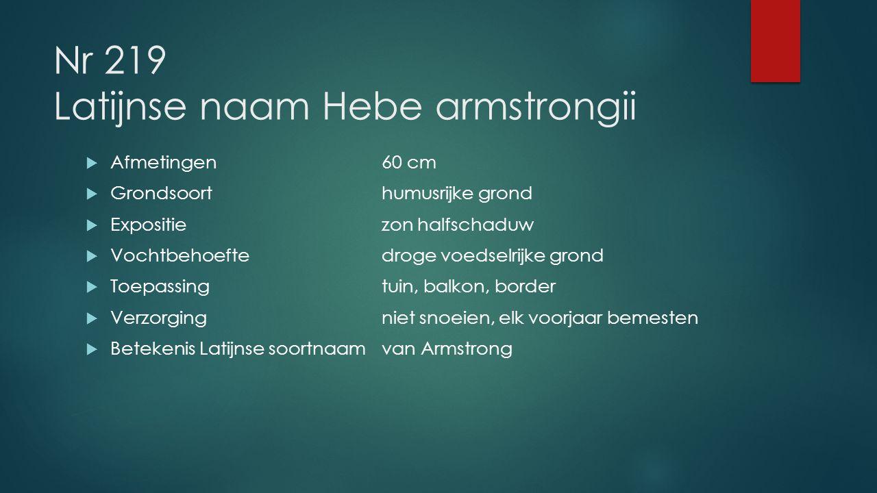 Nr 219 Latijnse naam Hebe armstrongii  Afmetingen60 cm  Grondsoorthumusrijke grond  Expositiezon halfschaduw  Vochtbehoeftedroge voedselrijke gron