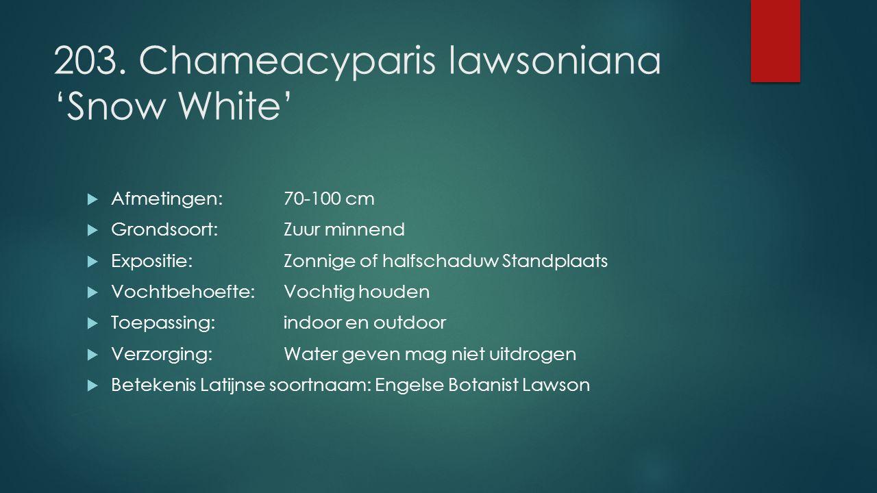 203. Chameacyparis lawsoniana 'Snow White'  Afmetingen:70-100 cm  Grondsoort:Zuur minnend  Expositie: Zonnige of halfschaduw Standplaats  Vochtbeh