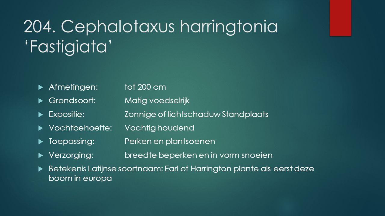 204. Cephalotaxus harringtonia 'Fastigiata'  Afmetingen:tot 200 cm  Grondsoort:Matig voedselrijk  Expositie: Zonnige of lichtschaduw Standplaats 