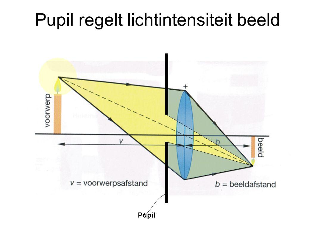 Pupil regelt lichtintensiteit beeld Pupil