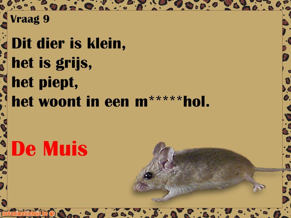 Dit dier is klein, het is grijs, het piept, het woont in een m*****hol. Vraag 9 De Muis