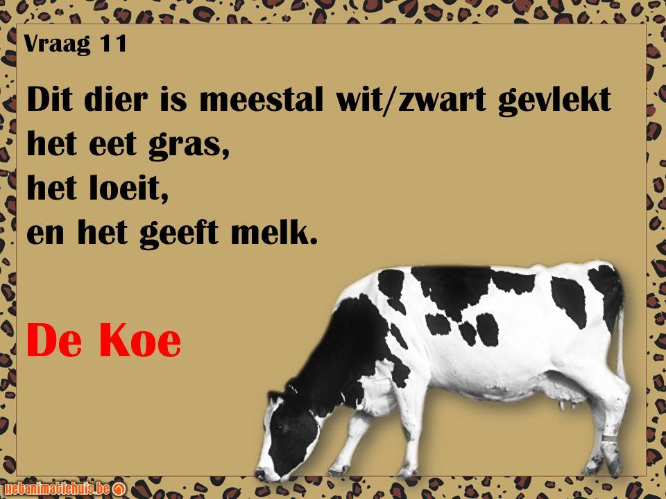 Dit dier is meestal wit/zwart gevlekt het eet gras, het loeit, en het geeft melk. Vraag 11 De Koe