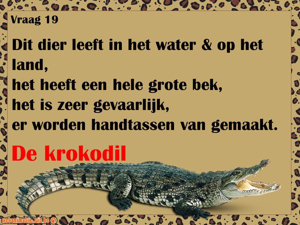 Dit dier leeft in het water & op het land, het heeft een hele grote bek, het is zeer gevaarlijk, er worden handtassen van gemaakt. Vraag 19 De krokodi