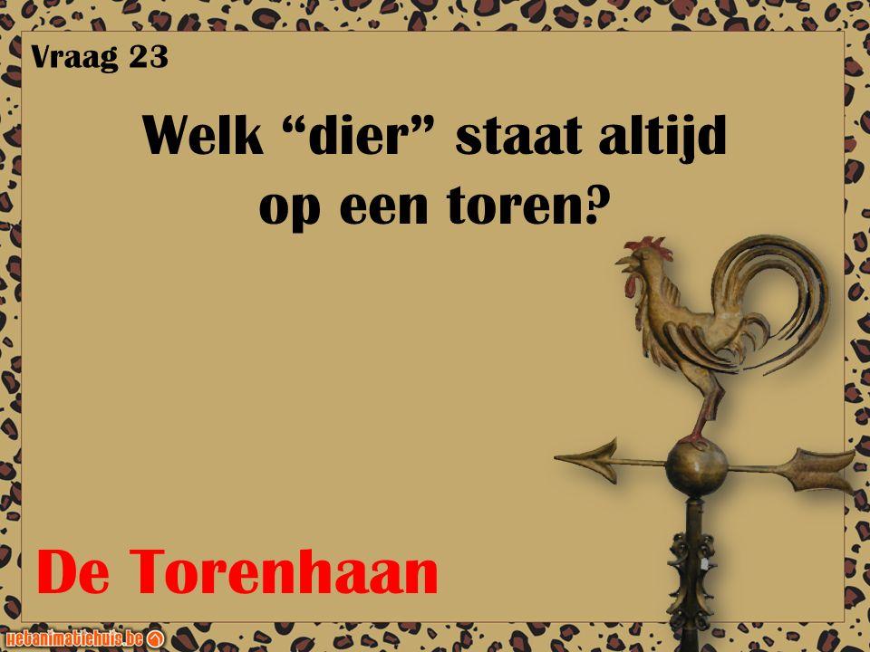 """Welk """"dier"""" staat altijd op een toren? Vraag 23 De Torenhaan"""