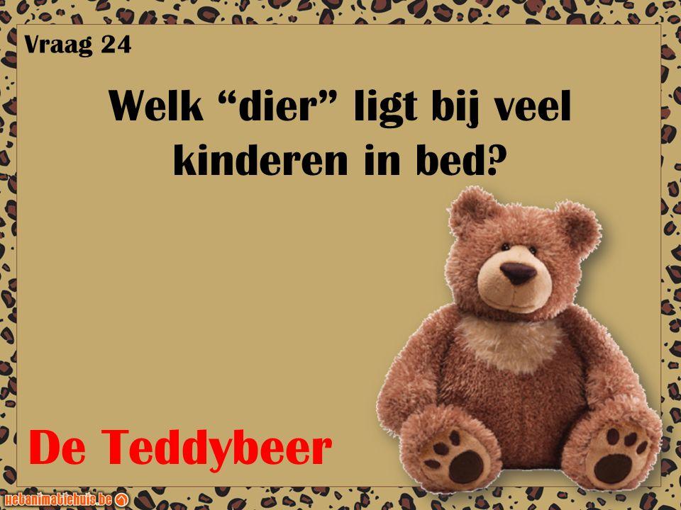 """Welk """"dier"""" ligt bij veel kinderen in bed? Vraag 24 De Teddybeer"""