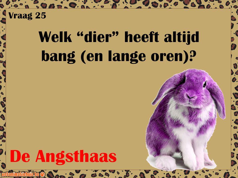 """Welk """"dier"""" heeft altijd bang (en lange oren)? Vraag 25 De Angsthaas"""