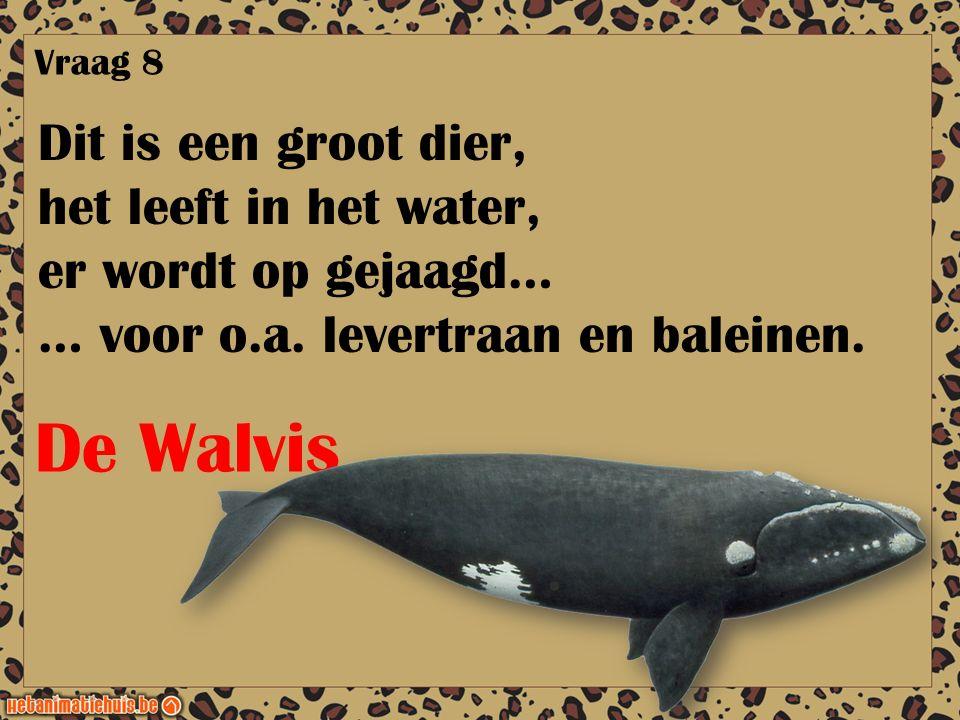 Dit is een groot dier, het leeft in het water, er wordt op gejaagd… … voor o.a. levertraan en baleinen. Vraag 8 De Walvis