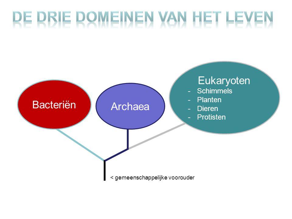 Bacteriën Eukaryoten -Schimmels -Planten -Dieren -Protisten Archaea < gemeenschappelijke voorouder