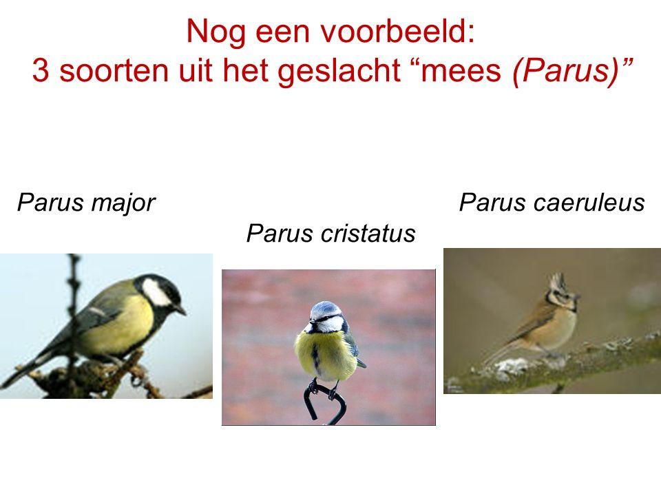 """Nog een voorbeeld: 3 soorten uit het geslacht """"mees (Parus)"""" Parus major Parus caeruleus Parus cristatus"""