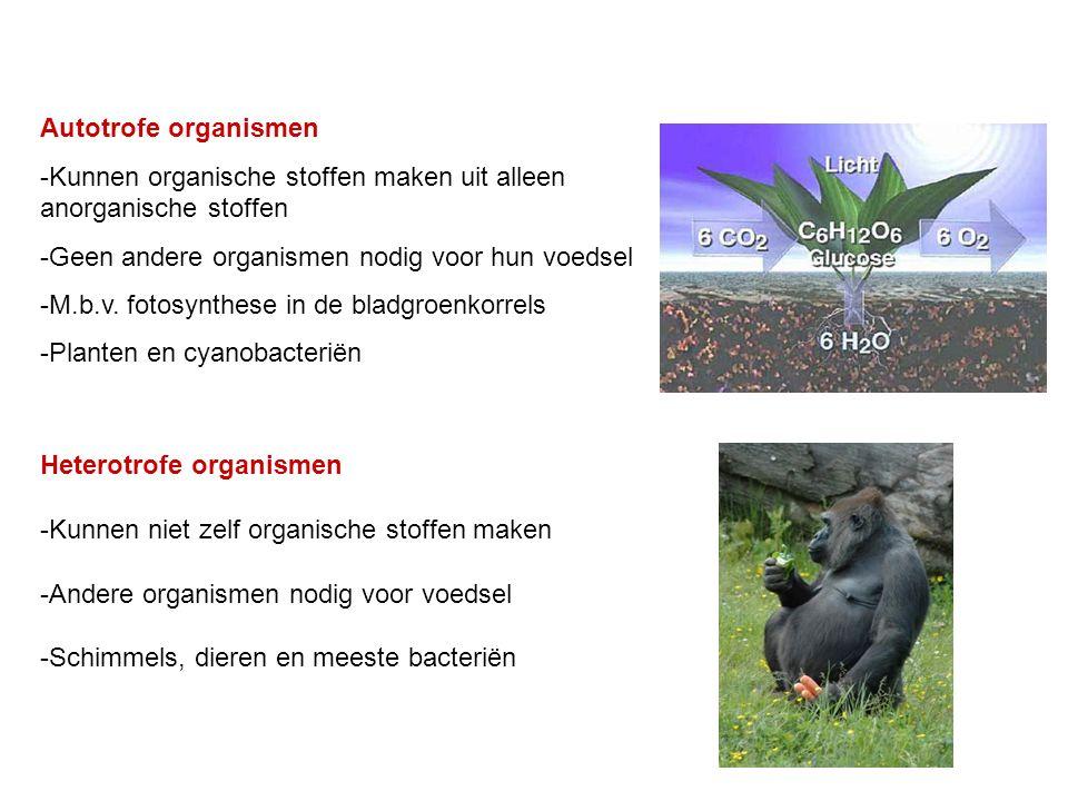 Autotrofe organismen -Kunnen organische stoffen maken uit alleen anorganische stoffen -Geen andere organismen nodig voor hun voedsel -M.b.v. fotosynth