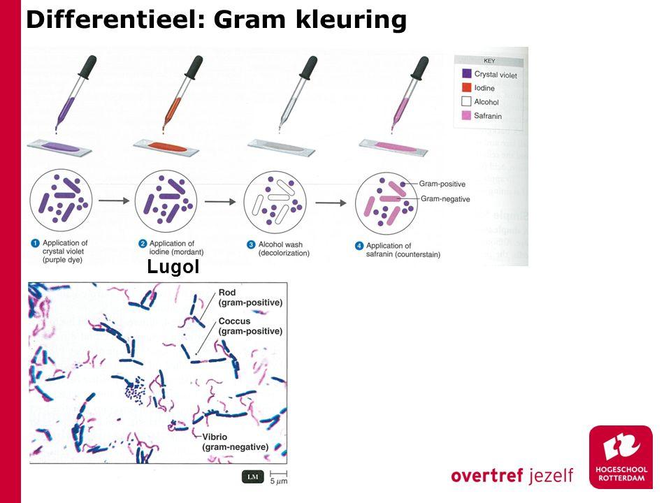 Differentieel: Gram kleuring Lugol