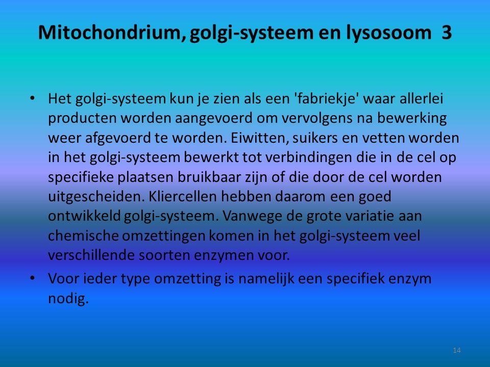 Mitochondrium, golgi-systeem en lysosoom 3 Het golgi-systeem kun je zien als een 'fabriekje' waar allerlei producten worden aangevoerd om vervolgens n