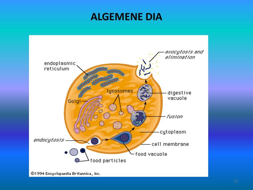 ALGEMENE DIA 17
