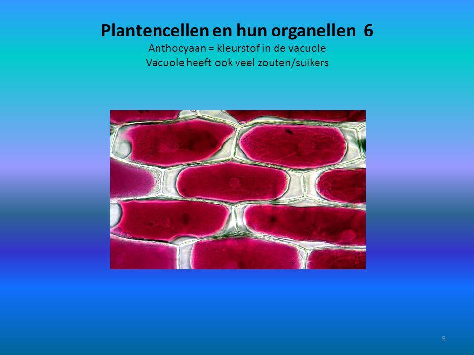 Mitochondrium, golgi-systeem en lysosoom 4 16