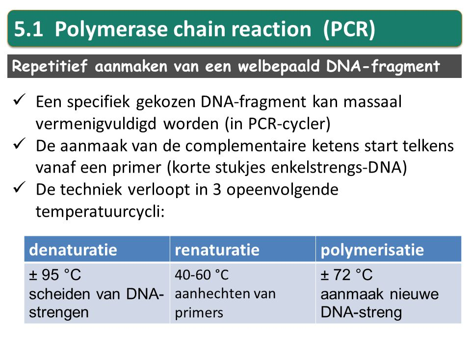 Denaturatie: Dubbelstreng wordt enkelstreng door t° op 95°C te brengen  H-bruggen verbroken Renaturatie: t° daalt tot 40-60°C  Aanhechten van forward en reverse primer (5'  3') Polymerisatie: t° naar 72°C Toevoegen van Taq-polymerase  Aanhechten van vrije nucleotiden vanaf startpunt (primer)