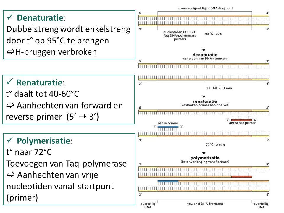 Van DNA-fragmenten met overtollig DNA naar gewenste DNA-dubbelstrengen  na 15 cycli is al meer dan 99,9% gewenst DNA  totaal aantal cycli: 30-40