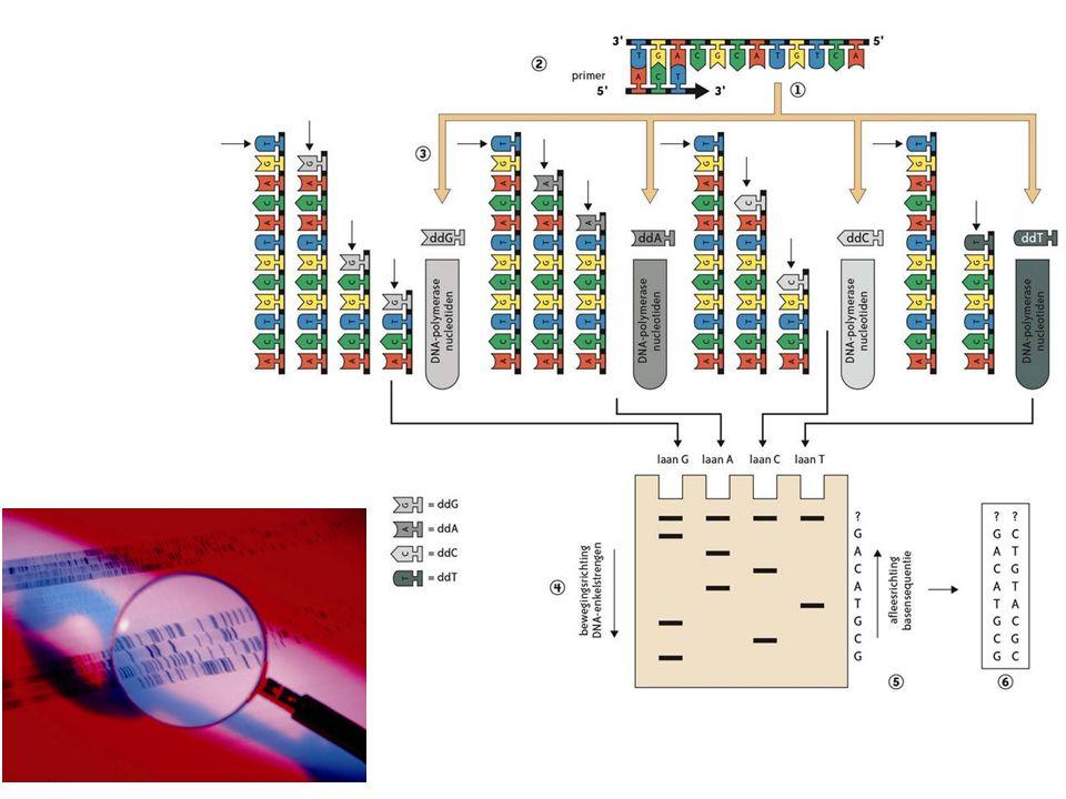 5.3.2 Automatische basensequentiebepaling Stopnucleotiden worden gemerkt met een fluorescente merker Merker wordt tijdens de elektroforese (in capillairen) gededecteerd door een sensor  elektroferogram