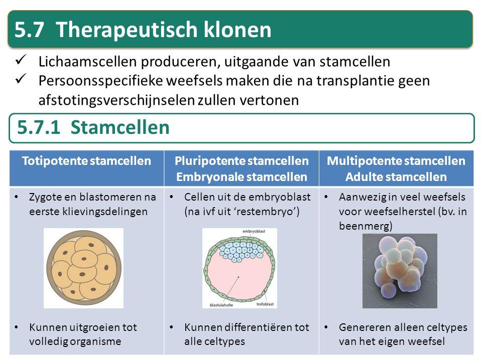 5.7 Therapeutisch klonen Lichaamscellen produceren, uitgaande van stamcellen Persoonsspecifieke weefsels maken die na transplantie geen afstotingsvers