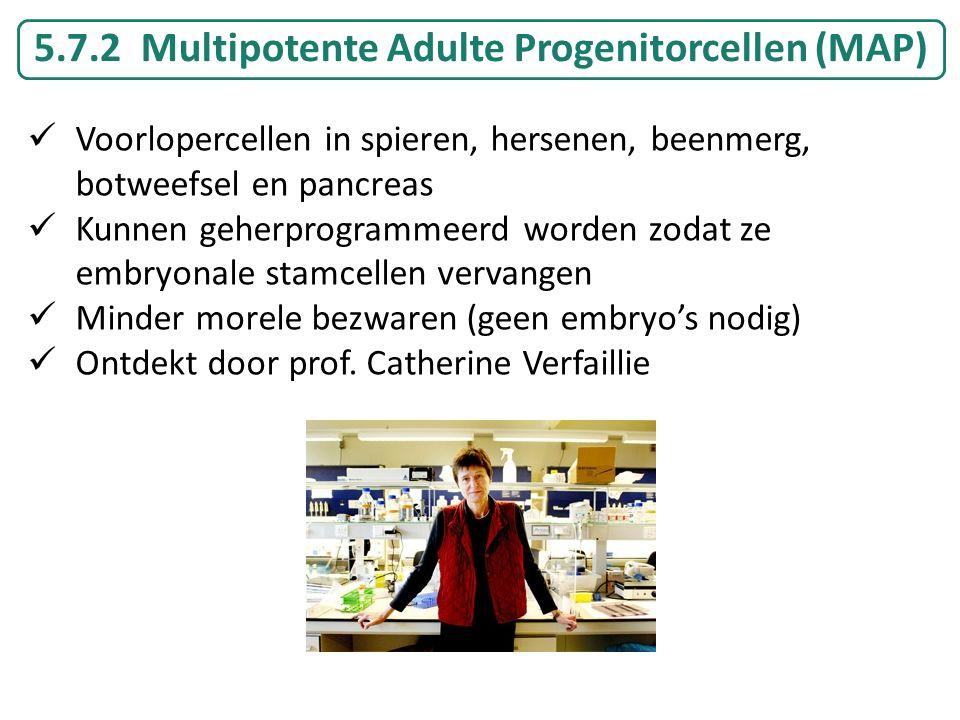 5.7.2 Multipotente Adulte Progenitorcellen (MAP) Voorlopercellen in spieren, hersenen, beenmerg, botweefsel en pancreas Kunnen geherprogrammeerd worde