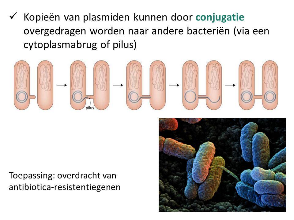 Kopieën van plasmiden kunnen door conjugatie overgedragen worden naar andere bacteriën (via een cytoplasmabrug of pilus) Toepassing: overdracht van an