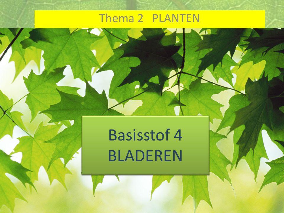 Basisstof 4 BLADEREN Thema 2 PLANTEN