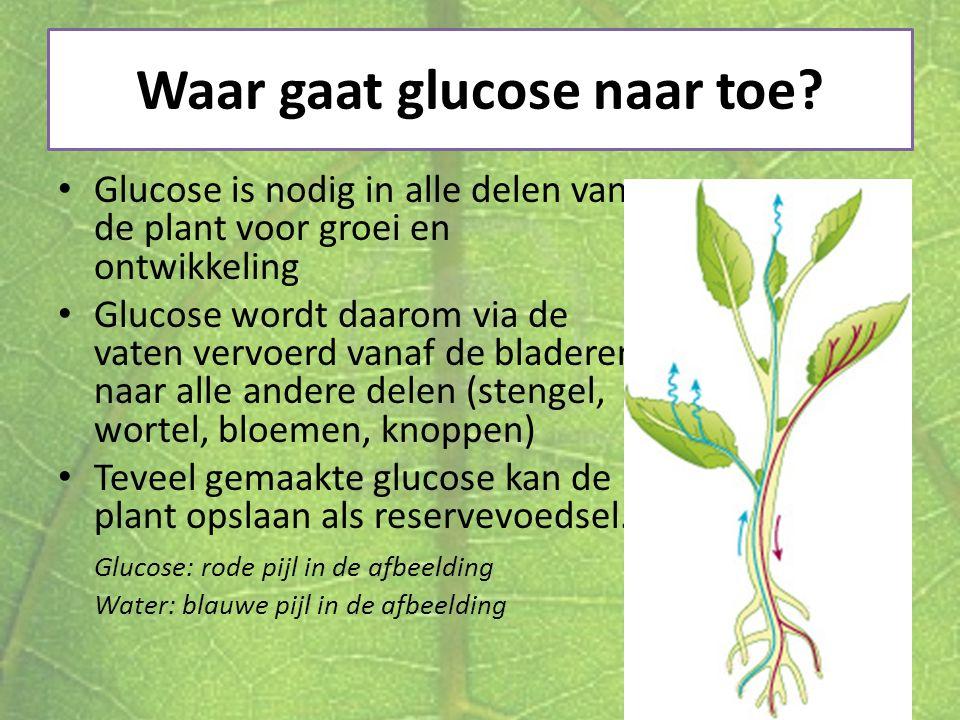 Waar gaat glucose naar toe? Glucose is nodig in alle delen van de plant voor groei en ontwikkeling Glucose wordt daarom via de vaten vervoerd vanaf de