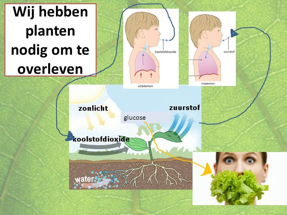 Wij hebben planten nodig om te overleven glucose