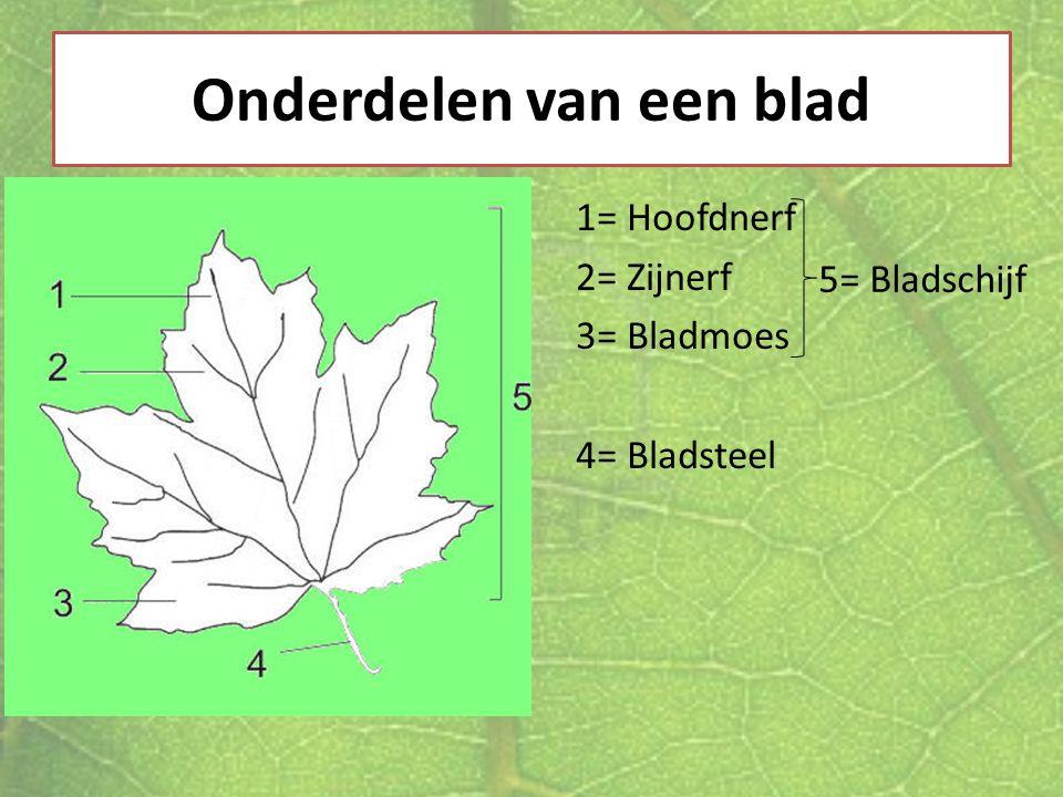Onderdelen van een blad 1= Hoofdnerf 2= Zijnerf 3= Bladmoes 4= Bladsteel 5= Bladschijf