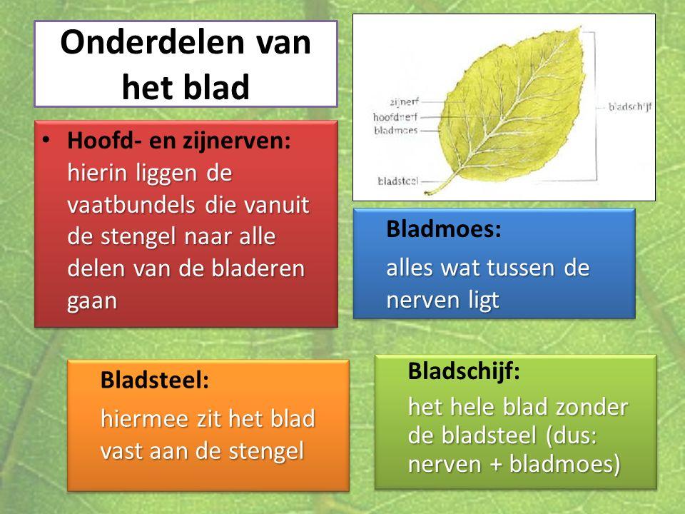 Onderdelen van het blad hierin liggen de vaatbundels die vanuit de stengel naar alle delen van de bladeren gaan Hoofd- en zijnerven: hierin liggen de