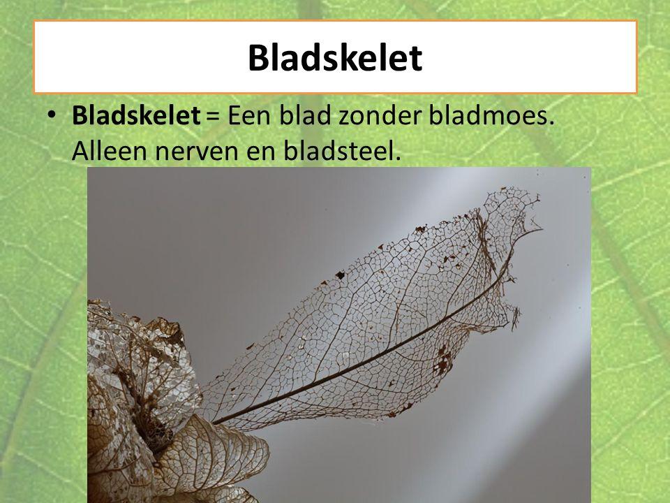 Bladskelet Bladskelet = Een blad zonder bladmoes. Alleen nerven en bladsteel.