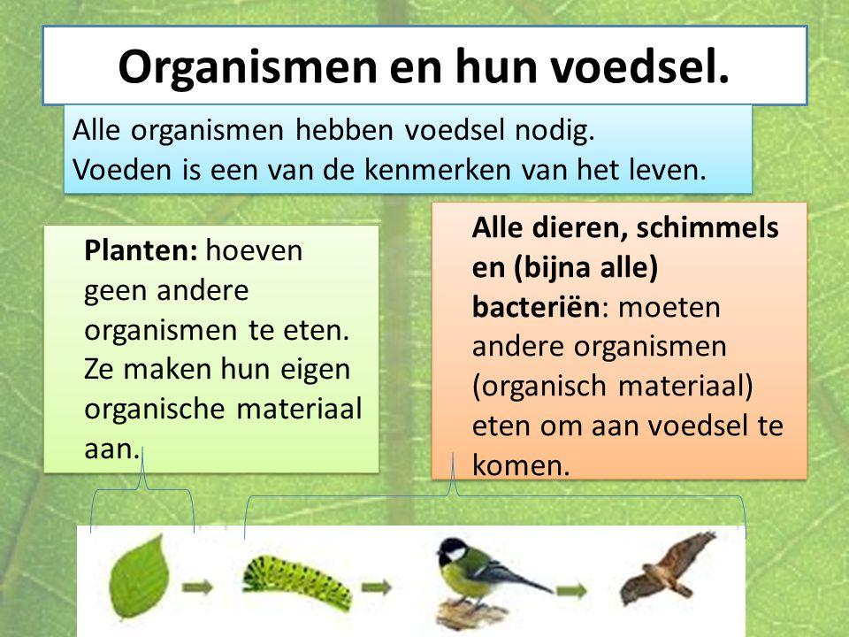 Organismen en hun voedsel. Planten: hoeven geen andere organismen te eten. Ze maken hun eigen organische materiaal aan. Alle dieren, schimmels en (bij