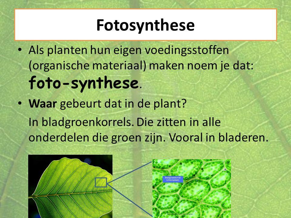 Fotosynthese Als planten hun eigen voedingsstoffen (organische materiaal) maken noem je dat: foto-synthese. Waar gebeurt dat in de plant? In bladgroen