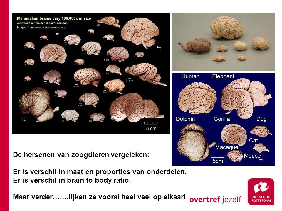 De hersenen van zoogdieren vergeleken: Er is verschil in maat en proporties van onderdelen. Er is verschil in brain to body ratio. Maar verder…….lijke