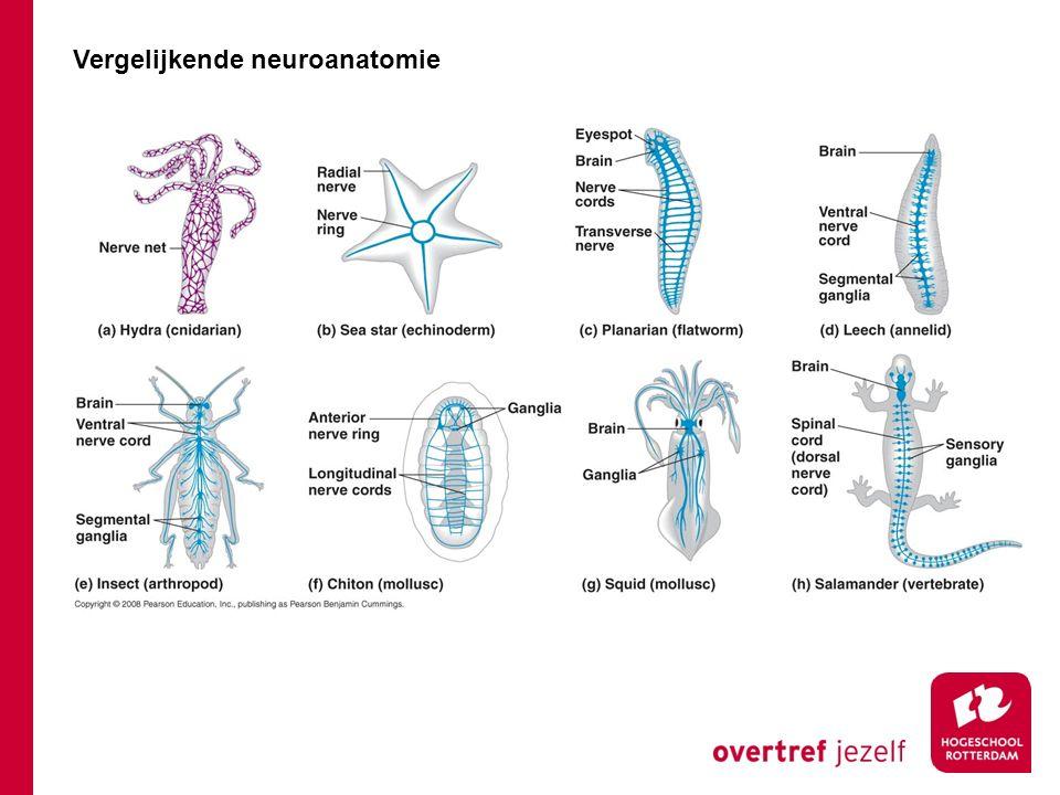 Vergelijkende neuroanatomie