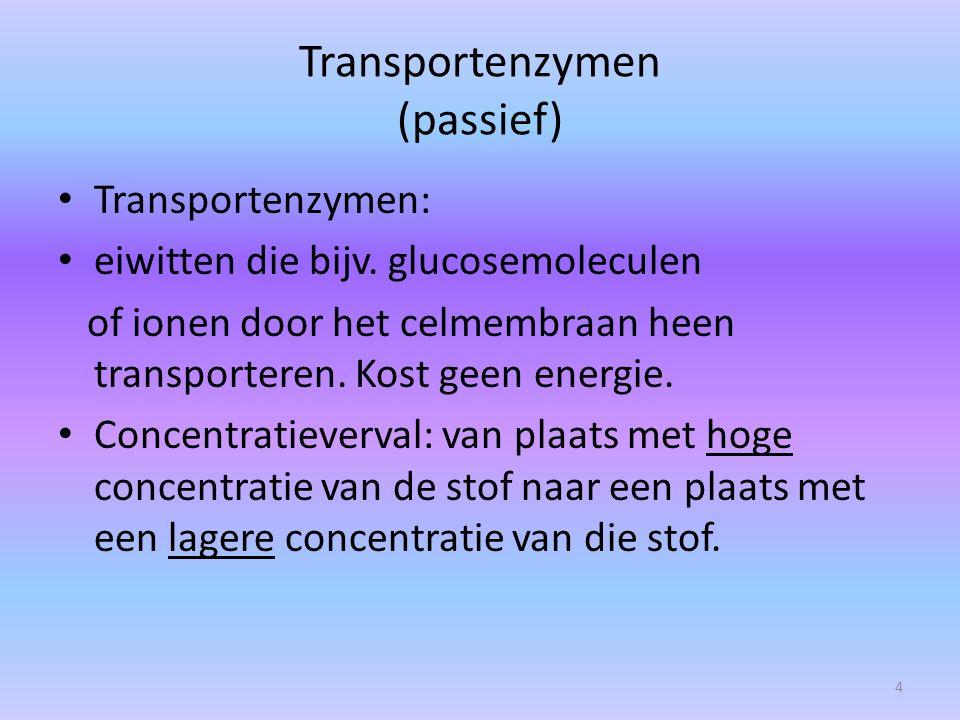Transportenzymen (passief) Transportenzymen: eiwitten die bijv. glucosemoleculen of ionen door het celmembraan heen transporteren. Kost geen energie.