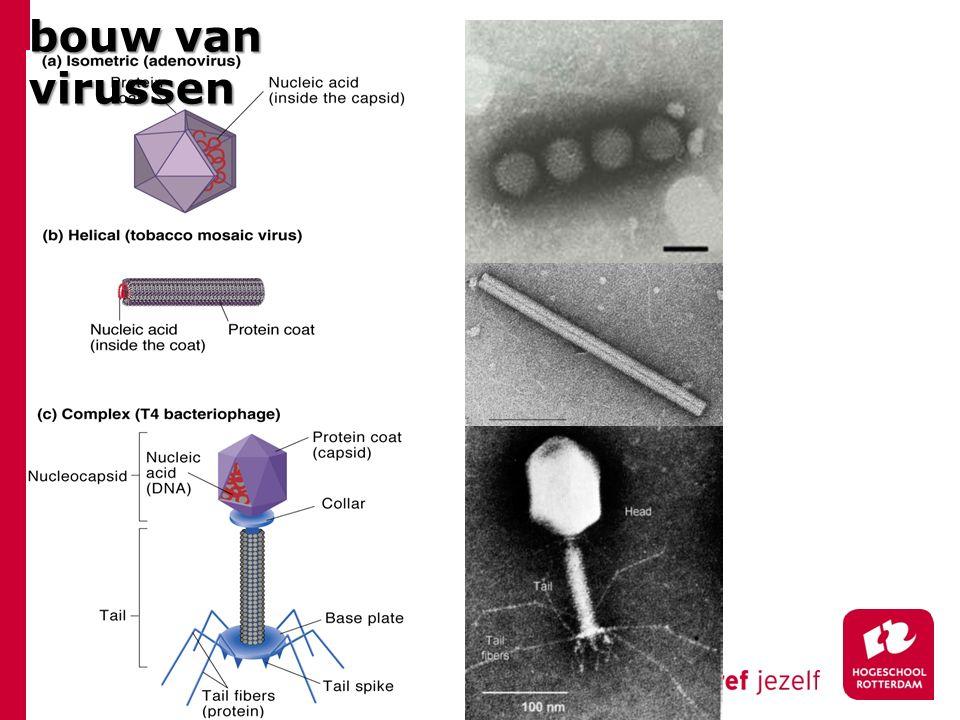 bouw van virussen