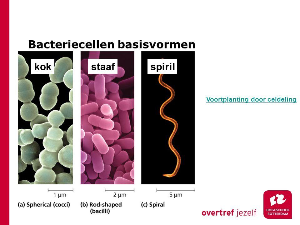 Bacteriecellen basisvormen kokstaafspiril Voortplanting door celdeling